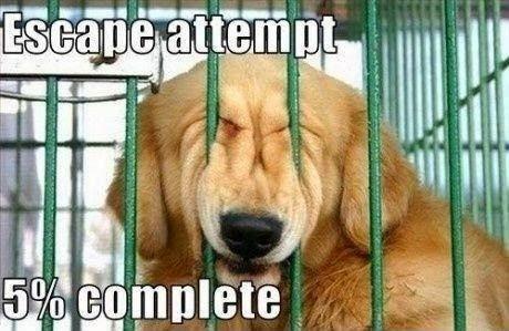 Escape attempt..!!