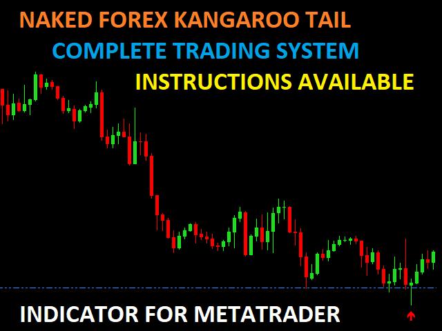 Kangaroo tail forex