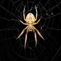 Дорогие друзья, просьба обновить ваш советник Spider Grid mt4 до версии 2.0, в ней добавлена функция запрета на открытие нового цикла ордеров, по закрытии предыдущей.  https://www.mql5.com/ru/market/product/15663   Dear friends, please update your Spider Grid EA mt4 to version 2.0, it added the function of the ban on the opening of a new cycle of orders at the close of the previous  https://www.mql5.com/ru/market/product/15663