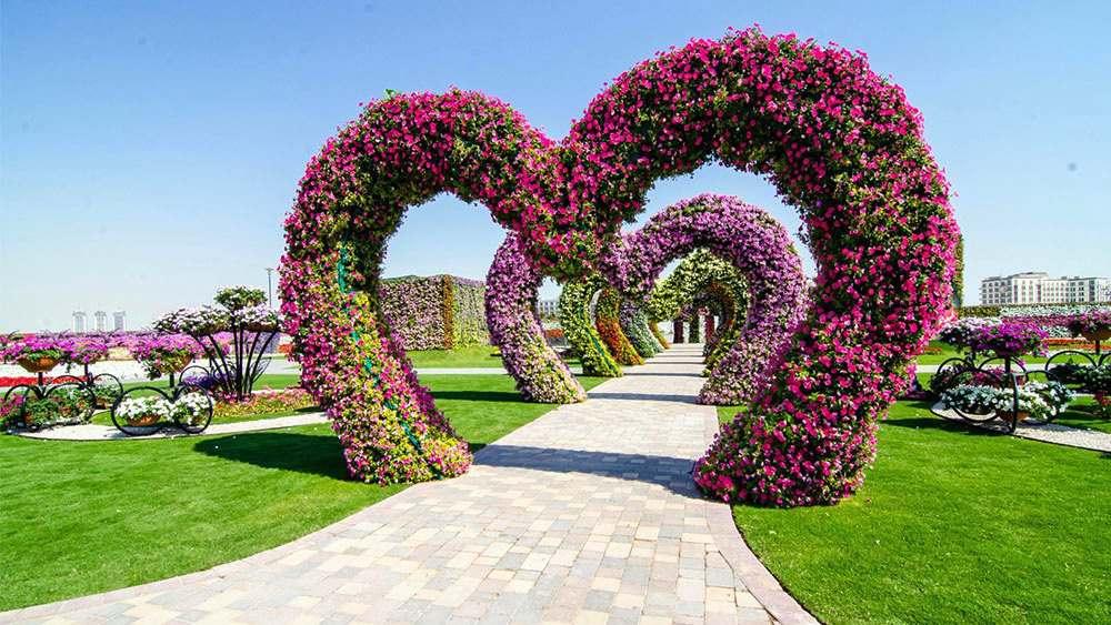 dubai miracle garden beautiful