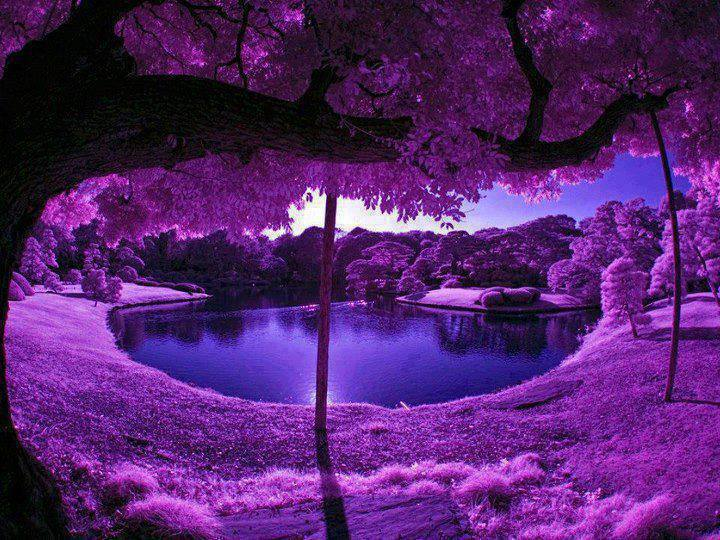 Purple Lake.