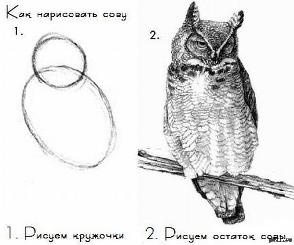 кружочки сова