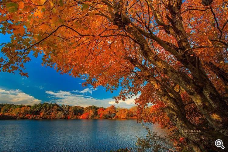 Fall foliage in Eastham, Massachusetts