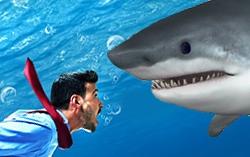акулы и планктон