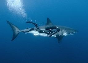 ММ и акулы