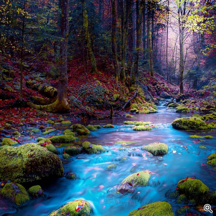 Magical forest and blue river