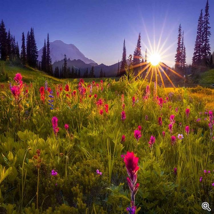 Colorful alpine meadow and forest