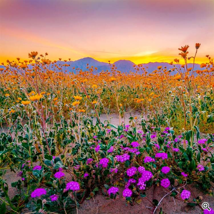 Mountain landscape with wildflowers and colorful spring evening