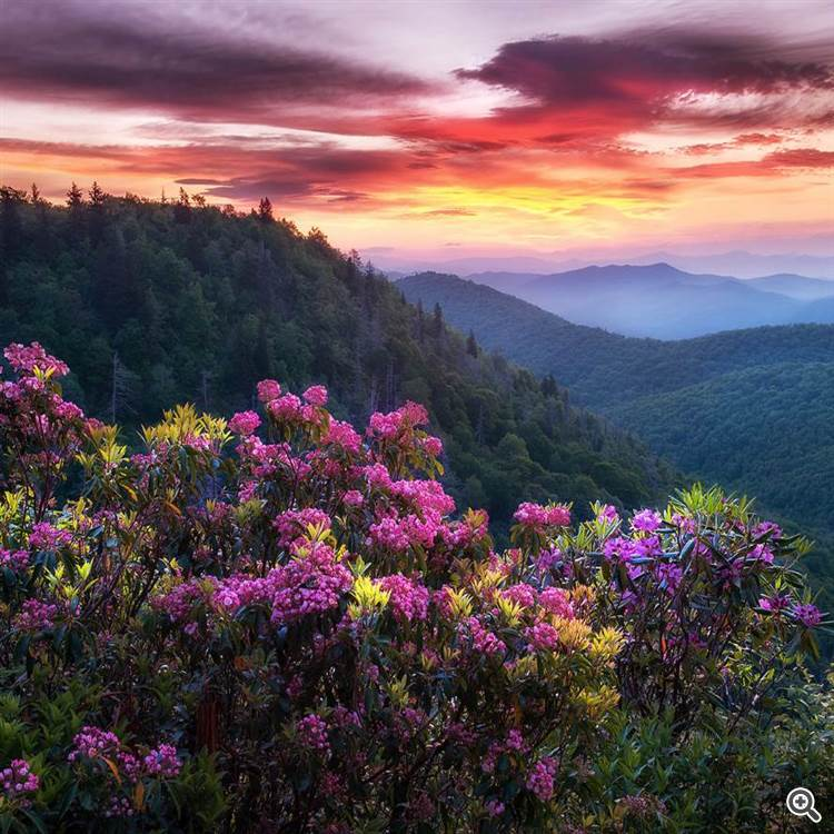 Mountains and azalea rhododendron flowers at sunrise