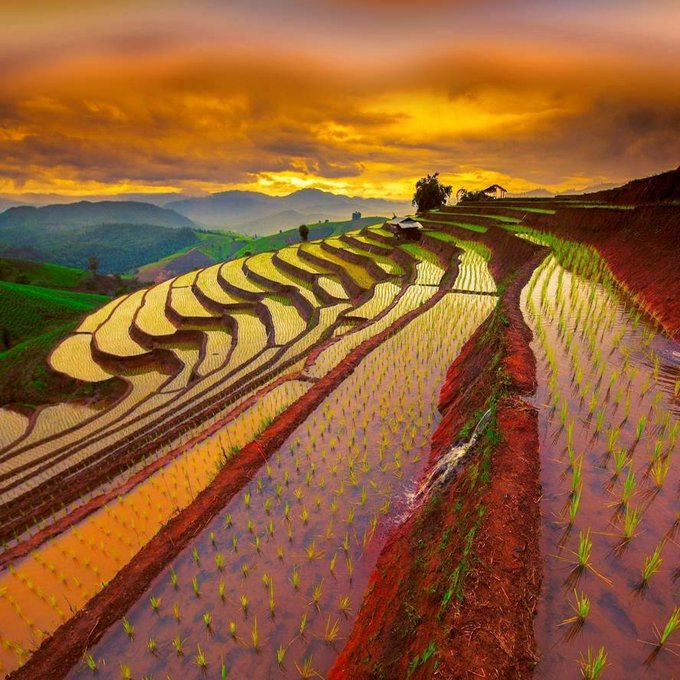 Rice fields and mountains at sunrise in Asia