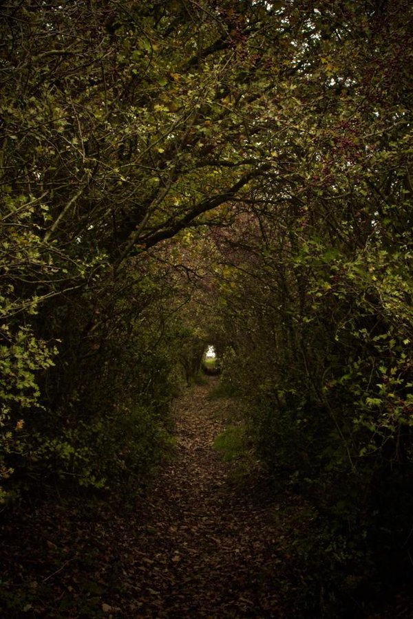Path To The Grove. Hollingworth, England