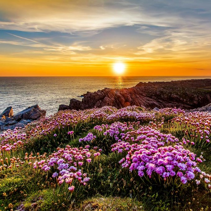 Beautiful evening with wildflowers and ocean at sunset
