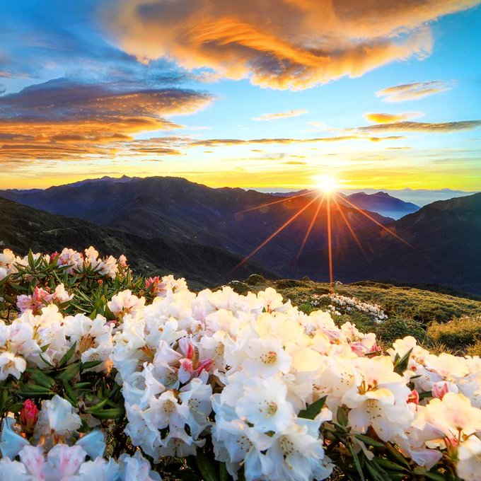 Mountain wildflowers with colorful sky and clouds at sunset