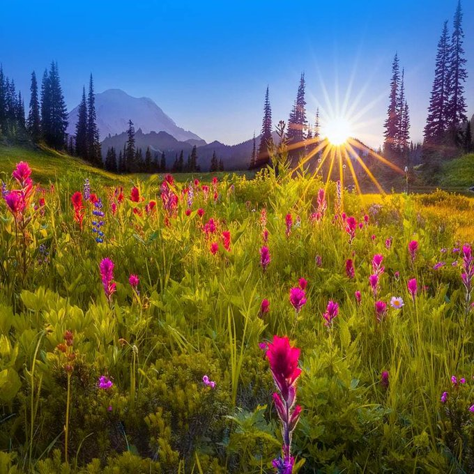 Shining alpine meadow and mountain forest at sunrise