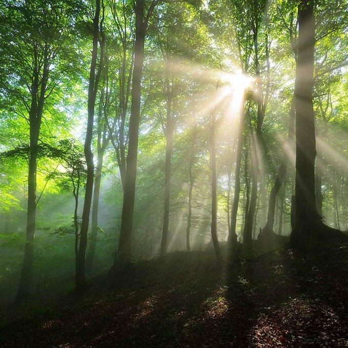 Beech forest path lit by soft summer sunlight