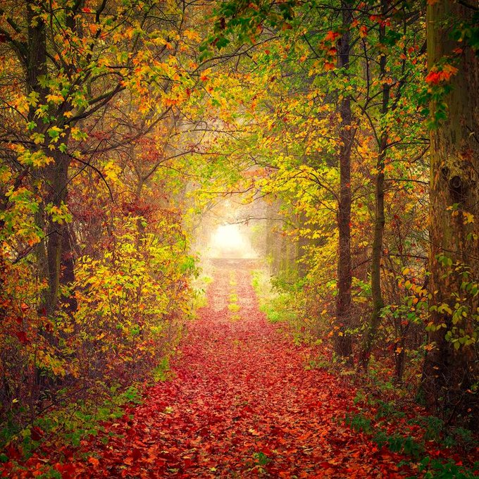 Magical path through a colorful forest with red and yellow leaves