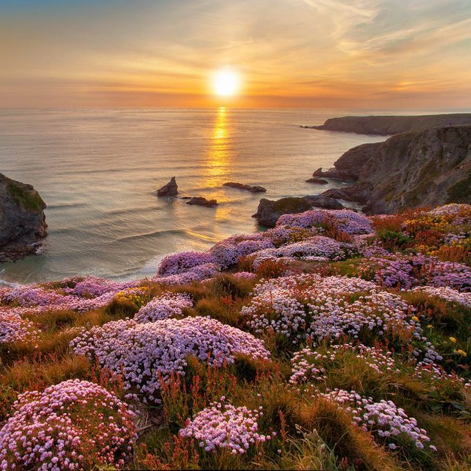 Stunning coastline view with cliffs covered with pink wildflowers