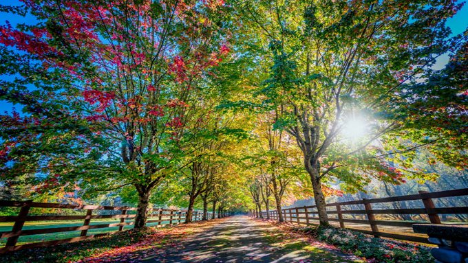Gentle golden sun rays shining onto a country lane
