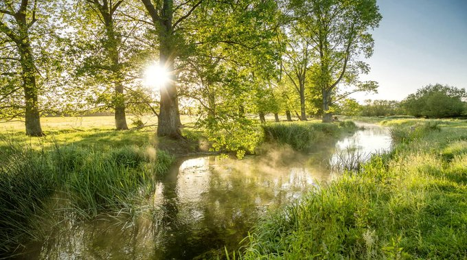 Sunny morning along a stream in countryside