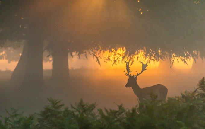 Another lovely misty sunrise in Bushy Park, London England ~ Thanks to David