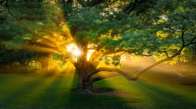 Beautiful morning with sunbeams pouring into the forest creating a mystical ambiance