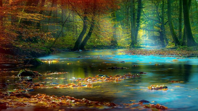 Colorful walk through a blue stream in the magical forest in autumn