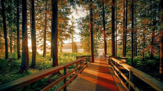 Lovely morning walk along the forest river