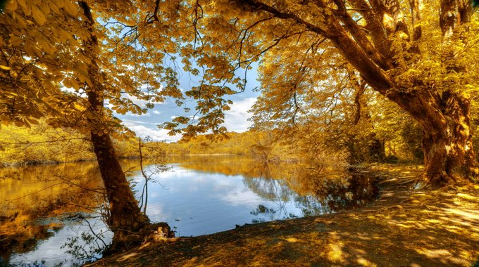 Placid river surrounded by lush golden forest