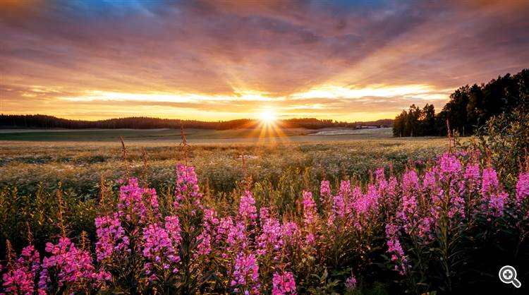 Colorful sunrise over pink wildflowers and countryside