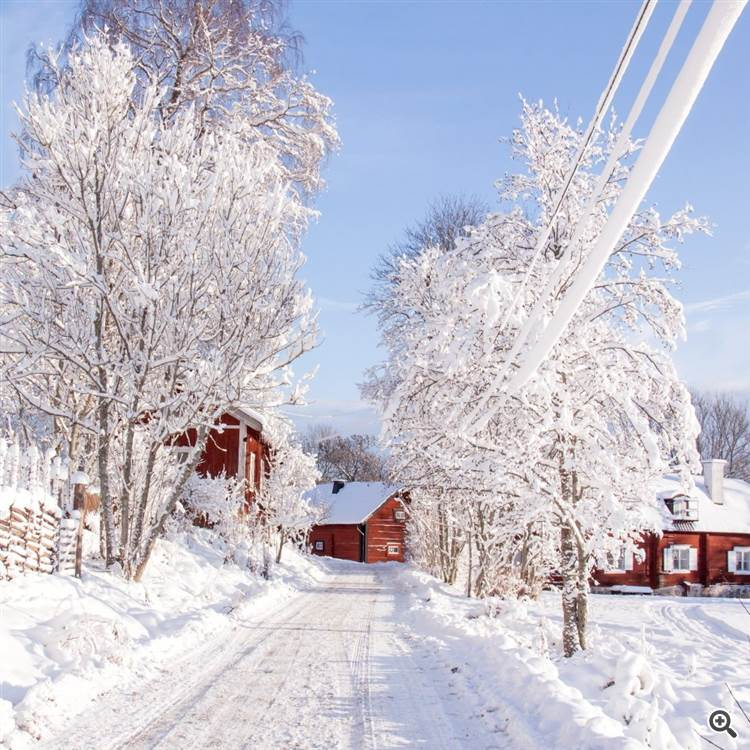 Country road in the winter forest with red houses and red northern cardinal