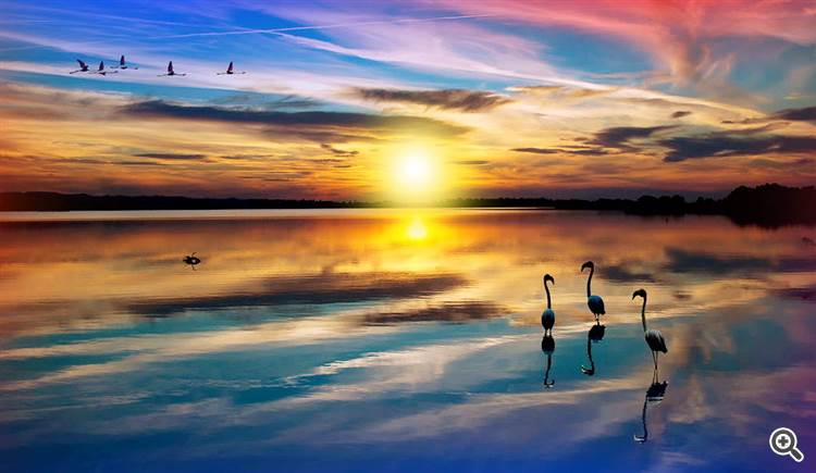 Magical colorful landscape with birds in flight over wetland during sunset