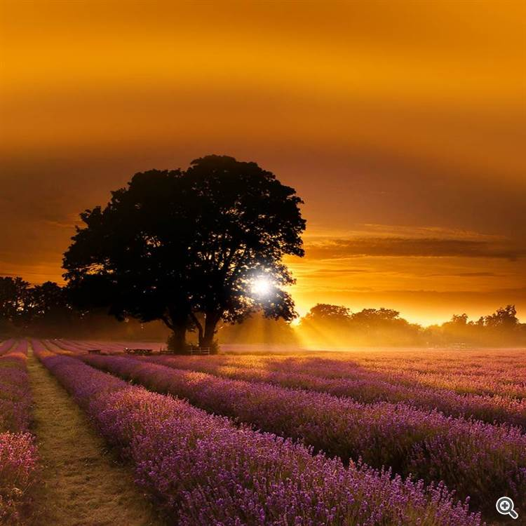Beautiful landscape with lavender in summer and countryside in autumn at sunset