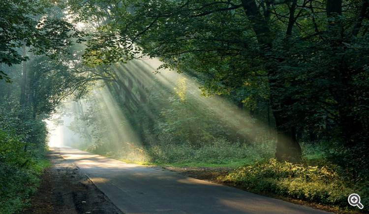 Road in the forest at sunrise