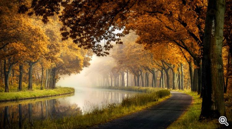 Tree tunnel and calm river in fog