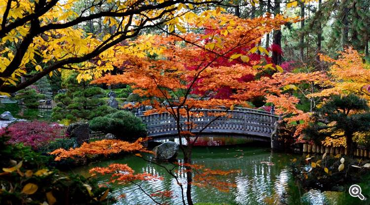 Japanese garden and red maple trees at Spokane in Washington