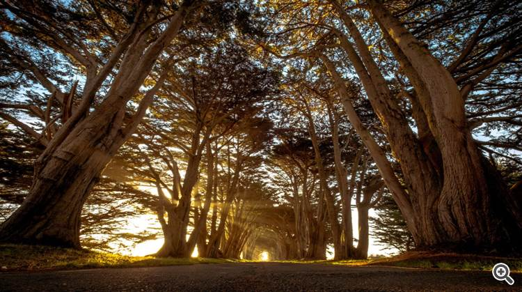 Cypress tree lined road in sunshine