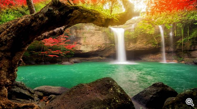Magical forest and emerald river