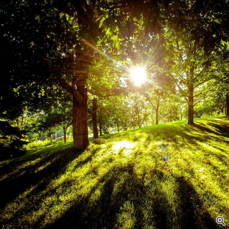 Sunlight through woods and river in the lush forest