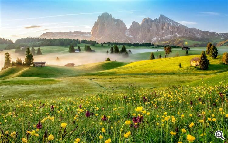 Beautiful spring morning and lush mountain meadow