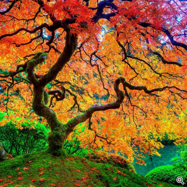 Magical golden and red trees