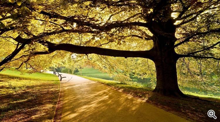 Walk under tree alley in spring