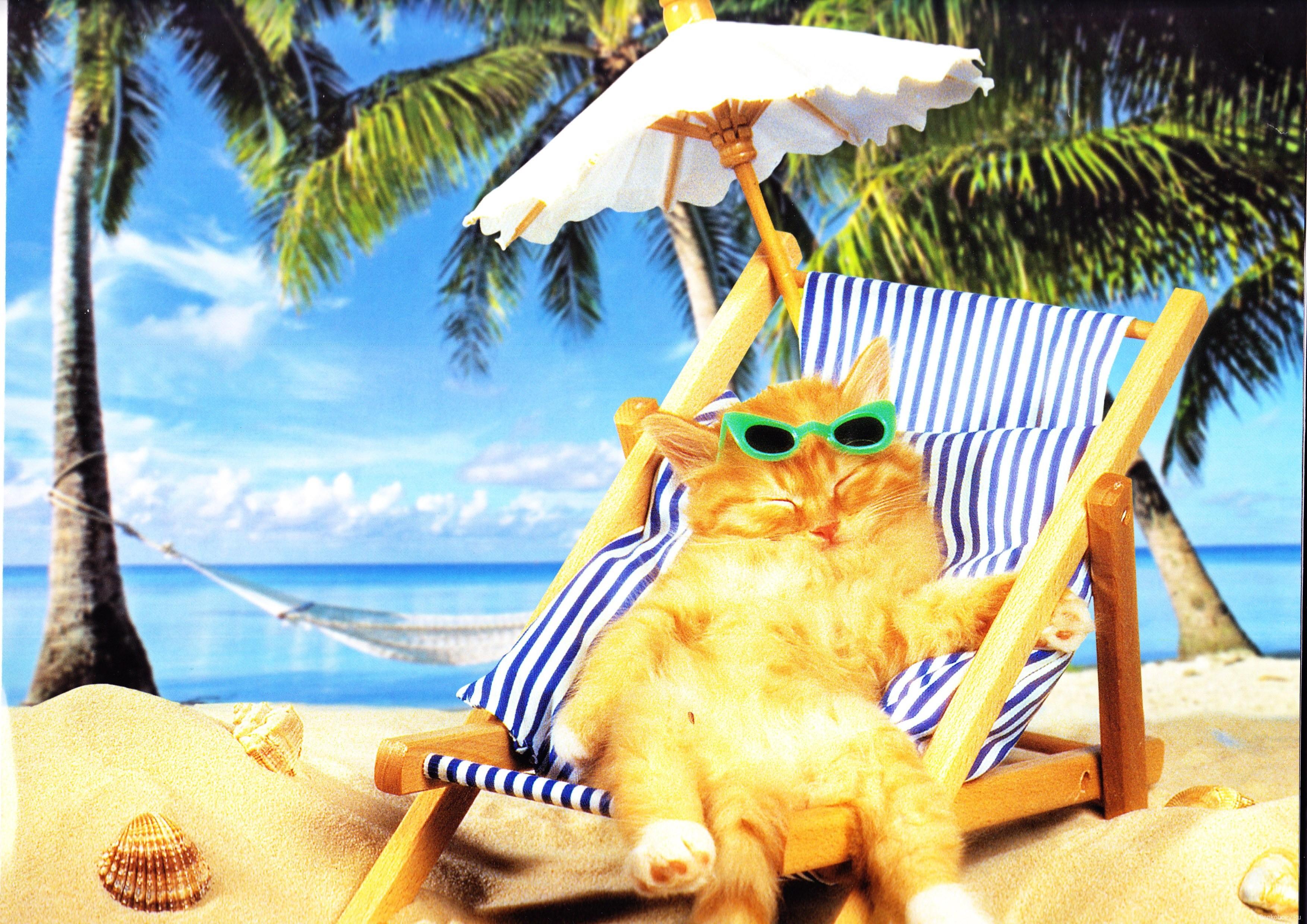 Смешные картинки об отпуске на море, города волге выпускнику