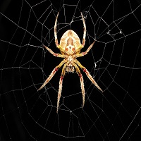 Buy the 'Spider Grid' Trading Robot (Expert Advisor) for MetaTrader