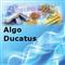 Algo Ducatus