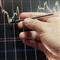Trades Analyser
