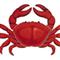 Forex Crab