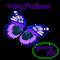 YFX Wing Patterns