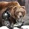 Brown Bear EA
