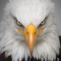 Eagle Scalper Pro
