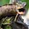 Salamander Scalper Pro MT5